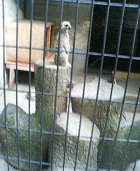 仕事帰りの動物公園
